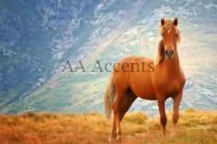 Horses48