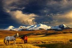 Horses50