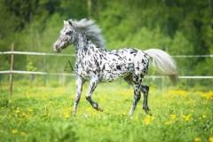 Horses53