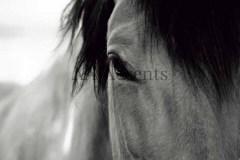 Horses54