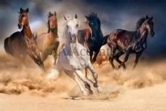 Horses58