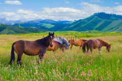 Horses63