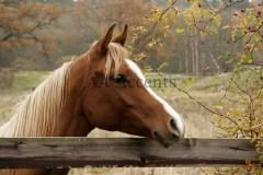 Horses64